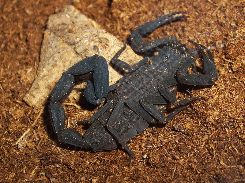 rencontre scorpion